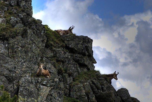 V našich horách môžete zažiť i jedno výnimočné stretnutie