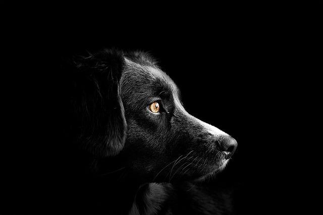 Zlý pes neexistuje. Majiteľ už však áno