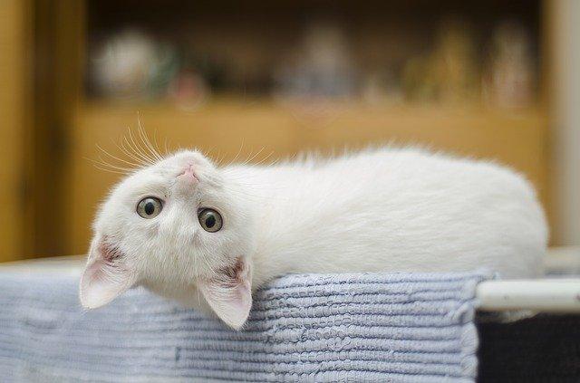 Starostlivosť o mačku vbyte